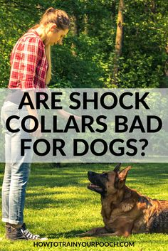Are Shock Collars Bad For Dogs? - How to Train Your Pooch E Collar Training, Off Leash Dog Training, Best Dog Training, Bark Collar Reviews, Dog Training Equipment, Dog Accesories, Dog Shock Collar, Most Beautiful Dogs, Buy A Dog