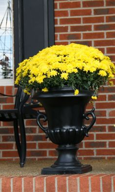 mums for the porch brighten fall...