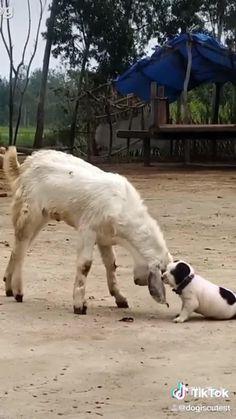 Super Cute Animals, Cute Funny Animals, Cute Baby Animals, Funny Looking Animals, Silly Dogs, Funny Dogs, Cute Dogs, Cute Animal Videos, Funny Animal Pictures