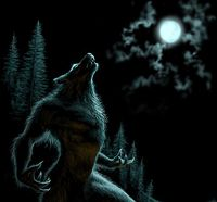 """Similar to various countries, Spain's werewolf, Lob Hombre, is unique to its country. As legends of the Spanish werewolf are being told, it is said that there are over seventy traditional expressions that can be used to avoid saying the word """"lobo"""" (""""Iberian""""). The use of many different words when speaking of Lob Hombre is, because of the belief that the werewolf can be invoked with the mere utterance of the word """"lobo"""" (""""Iberian"""")."""