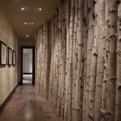 Birch Tree Logs