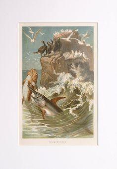 1903 SWORDFISH print original antique sea by antiqueprintstore Fish Wall Art, Fish Art, Sea Life Art, Antique Prints, Old Antiques, Art Prints, The Originals, Ocean, Painting