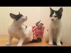 KITTENS - YouTube Kittens, Cats, Dracula, Action, Youtube, Animals, Cute Kittens, Gatos, Animales