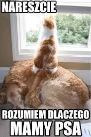 Funny Animals, Funny Cats, Dog Cat, Cats And Dogs, Adorable Animal Funny Animal Pictures, Funny Animals, Cute Animals, Funny Dogs, Dog Pictures, Funny Humor, Cats Humor, Funny Photos, Hilarious Memes