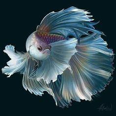 Pretty Fish, Beautiful Fish, Animals Beautiful, Fish Drawings, Animal Drawings, Colorful Fish, Tropical Fish, Regard Animal, Animals And Pets