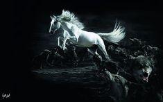صور سوداء 2020 خلفيات سوداء ساده للتصميم Horses Black Horses Animals