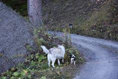 Ich machte im Jahr 2008 einen Aufenthalt in Tersnaus im Kanton Graubünden / Schweiz.