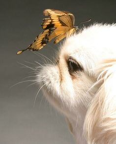 dog and buterfly by susandelfino, via Flickr