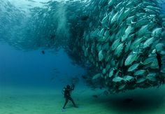 Some of the Best Humans Underwater animals Photography