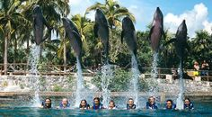 Xel-Ha ecological water park, Riviera Maya, Mexico. Best place for a day excursion and a great place to swim with dolphins!