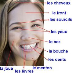 Le visage Visit the French Lessons Brisbane website here at http://www.frenchlessonsbrisbane.com.au/french-lessons-for-adults to learn more about Skype French lessons and other French language class opportunities as well http://www.frenchlessonsbrisbane.com.au/ #frenchlessons #frenchlanguagelearning
