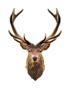 Stag1.1