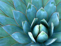Succulents. . . my favorite