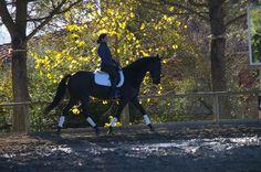 classical riding Il Paretaio