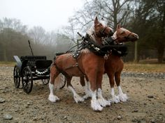 Miniature Dollhouse Team Leather Horses and wagon by Woolytales Miniatures.