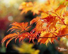 fall foliage 2015 virginia - Google Search