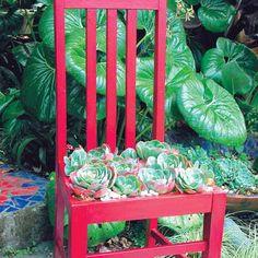 Succulent Planter | Learn More | Garden | Library | ReUse Ideas | The ReBuilding Center