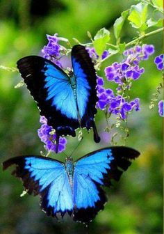 Beautiful!! These butterflies always remind me of my cousin!