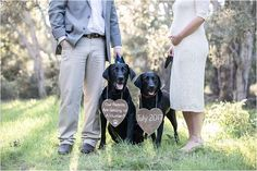 Gender Reveal Maternity Session with Dogs | Our Parents are Getting Us A Human