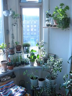 windowgarden by Loulou Harbour, via Flickr
