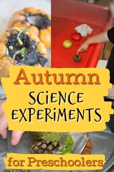 Fabulous Fall Science Experiments Science experiments for preschoolers this Fall. Nice and simple ideas for the littlest of kids to explore this Autumn. Fall Activities For Toddlers, Educational Activities For Preschoolers, Science Experiments For Preschoolers, Creative Activities For Kids, Preschool Science, Science For Kids, Science Week, Summer Science, Chemistry Experiments