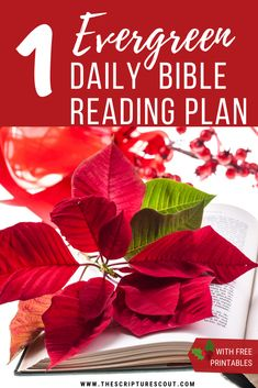 Your personal 'evergreen' daily bible reading plan should take about 15 minutes a day. It is managed by month and goes through the bible thematically. Although some passages seem unrelated ... they are very related! It takes a scripture scout like you to see how! Arrives by email.  Daily Bible Reading | evergreen bible reading plan | bible reading plan | read the bible in a year | read through the bible | DBR Daily Bible Reading Plan, Bible Study Plans, Bible Study Journal, Christian Life, Christian Women Blogs, Mom Devotional, Bible In A Year, Bible Studies For Beginners, Inspirational Bible Quotes