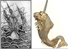 Sea monsters from old maps