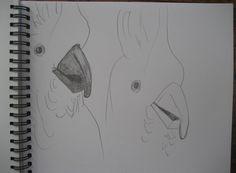 Cockatoos drawn by Carla Maxwell, Daylesford, Victoria, Australia www.CarlaMaxwell.com www.TasmaHouse.com