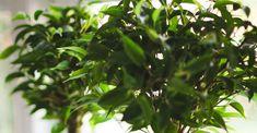 10 luchtzuiverende kamerplanten