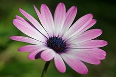 """Everytime i see these daisies i think """"wow"""""""