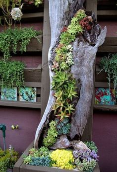 30 Captivating Backyard Succulent Gardens You Can Easily DIY. These succulent gardens are so easy to make and are beautiful! Try growing your own succulent garden! diy garden ideas 30 Captivating Backyard Succulent Gardens You Can Easily DIY Diy Garden, Lush Garden, Garden Projects, Garden Art, Garden Plants, Indoor Plants, Garden Landscaping, Landscaping Ideas, Backyard Plants