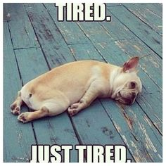 poor puppy!  There are days I feel the same way!!  LOL