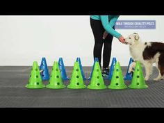 FitPAWS® CanineGym® Agility Set - YouTube