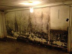 34 best mold images boards buffalo house rh pinterest com