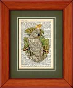 Dictionary Print  Cockatoo On Branch  6 3/4 x 9 3/4 by PagesOfAges, $7.00