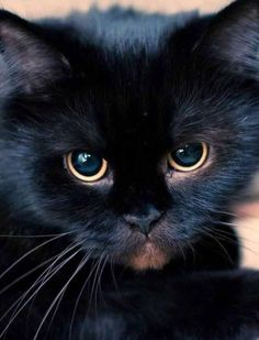 Black beauty ❤️#cat #cats