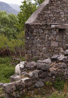 Scotland, sheep by Joe Dunckley, via Flickr