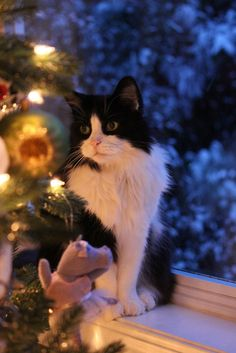 Seuss christmas ღ kitty For more Christmas Cats, visit https://www.facebook.com/funholidaycats