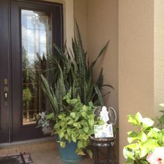 Big potted plant without flowers for the front yard by the for Potted plants by front door