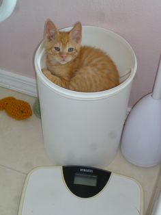 A large bathroom makes a good area to isolate new fosters.