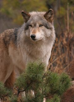 """sisterofthewolves: """" Picture by iStockPhotos """""""