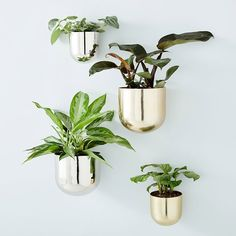 The following are the latest trends in metal flower pots, which may change the way you grow. Garden Terrarium, Glass Terrarium, Terrariums, Window Planters, Hanging Planters, Outdoor Planters, Wall Mounted Planters Indoor, Planter Boxes, Indoor Plants