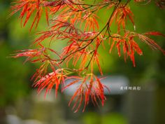 Leaves 09 by Wei-San Ooi  on 500px