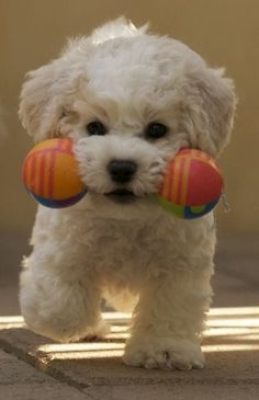 Mighty dog and his barbell.  So cute.