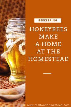 Do you worry about the honeybees? We discuss why we became beekeepers and 6 ways we can help support bees everyday at home. Honey Recipes, Real Food Recipes, How Did It Go, How To Make, Bee Friendly Plants, Planting Sunflowers, Beekeeping For Beginners, Raising Bees, Bee Do