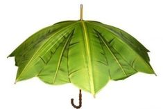 Banana leaf umbrella - I actually own this bumbershoot! Love it on a dreary day!