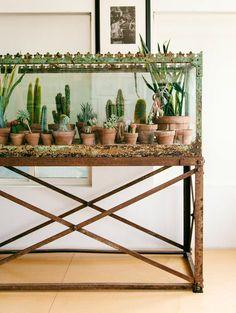 Bohemian Decor Succulents Cactus DIY Terrarium from Fish Tank Sweet Home, Cactus Y Suculentas, Cacti And Succulents, Cacti Garden, Aquarium Garden, Cactus Plants, Potted Plants, Diy Aquarium, Aquarium Decorations