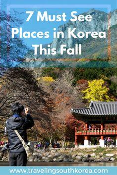 7 must see places in south korea in fall. Damyang, Baekyangsa, Suncheon Bay, etc