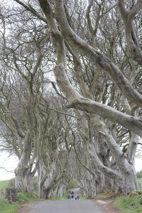 Dark hedges, Game of Thrones, Irlande du Nord