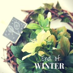 Ideal winter decoration with flowers